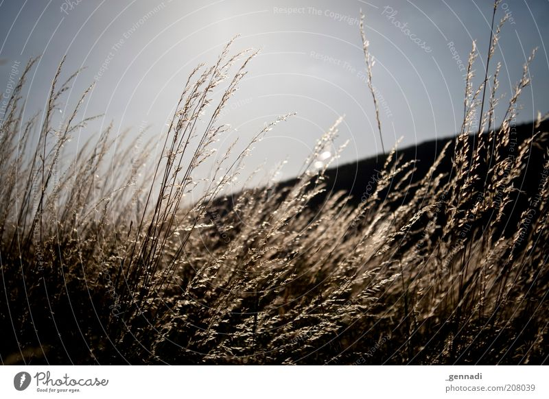 Sky Blue Plant Black Grass Sadness Wind Environment Gold Grief Gloomy Beautiful weather Vignetting Agricultural crop Cloudless sky