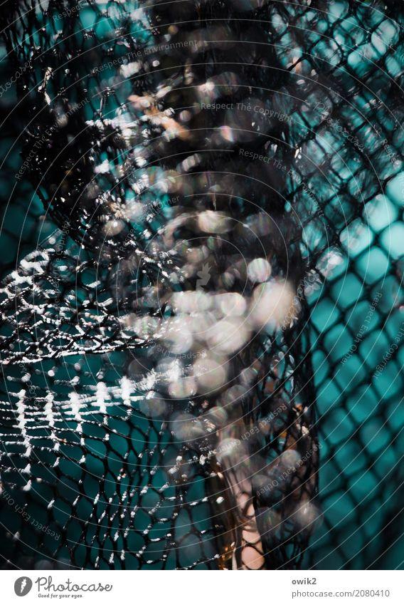 Fish nightmare Landing net Reticular Net Plastic Illuminate Firm Glittering Near Orange Black Turquoise White Patient Calm Threat Risk Flexible Loop