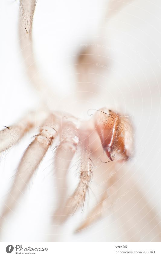White Animal Head Legs Glittering Insect Crawl Macro (Extreme close-up) Movement