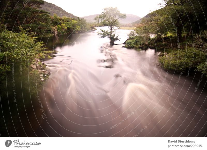 Kerry way Nature Landscape Plant Water Spring Summer Tree Foliage plant Forest River bank Green White Motion blur Ireland Exposure Flow Mountain Colour photo
