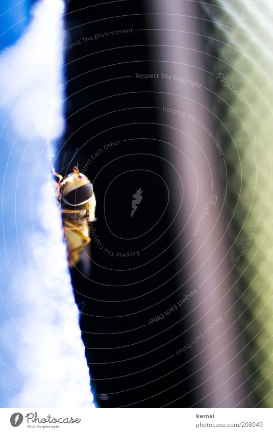 Stowaway Environment Nature Animal Summer Wild animal Fly Animal face Insect Hover fly Feeler 1 Sit Colour photo Interior shot Close-up Copy Space right Day
