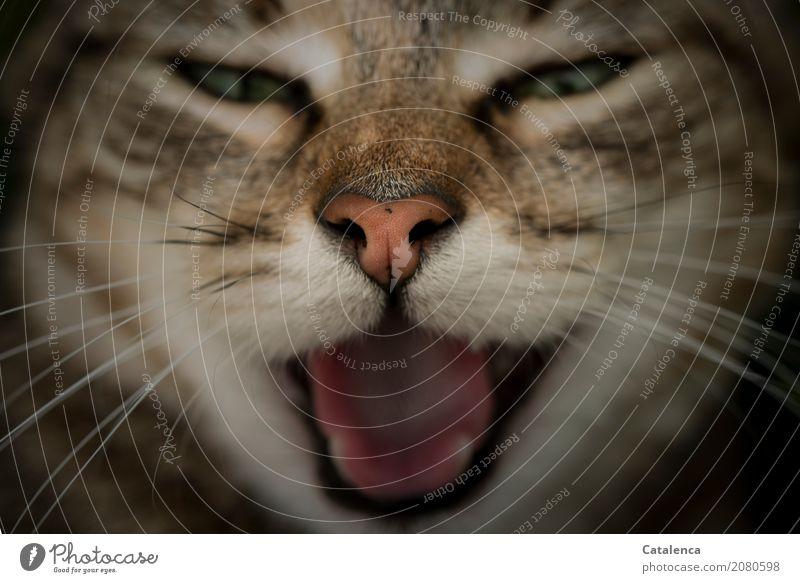 Party mood, yeah paaarty! Pet Cat Animal face cat snout Tongue Set of teeth 1 Brash Beautiful Brown Green Orange Pink Black Moody Yawn Relaxation Communicate
