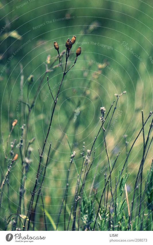 Nature Green Plant Summer Grass Spring Warmth Landscape Brown Environment Esthetic Bushes Natural Dry Beautiful weather Drought