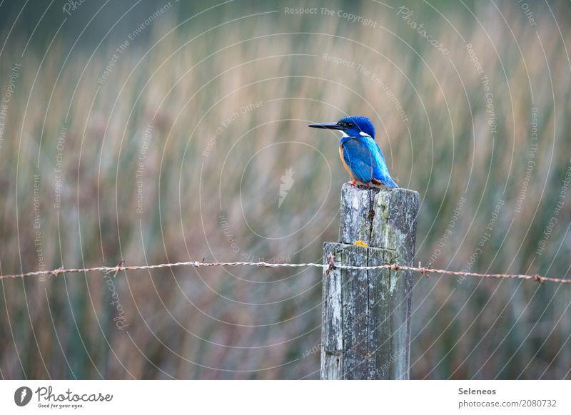 Nature Animal Environment Natural Coast Small Freedom Bird Wild animal Observe Lakeside Near River bank Animal face Beak Ornithology