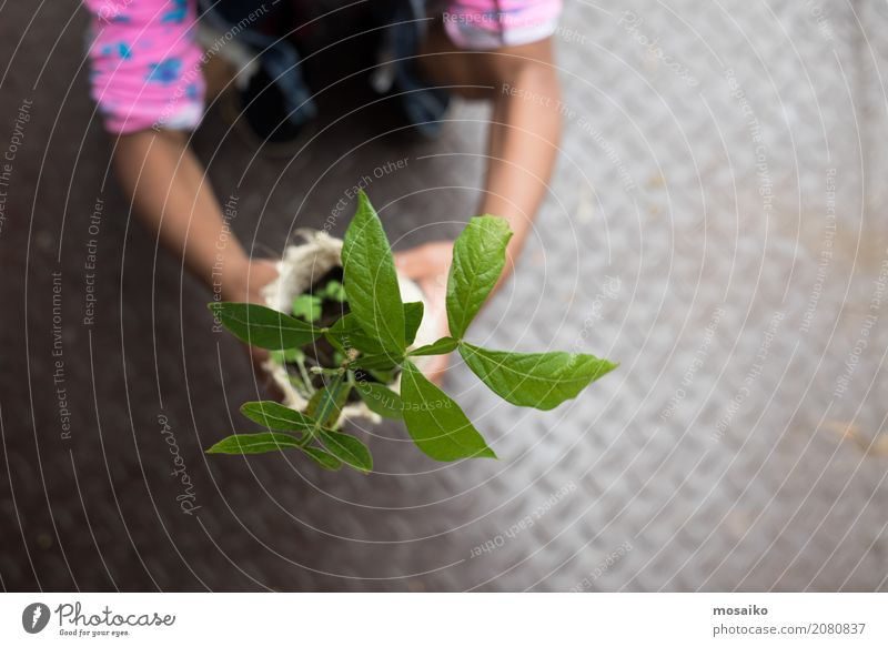Girl keeps small plant Parenting Education Science & Research Kindergarten School Study Schoolchild 3 - 8 years Child Infancy Plant Old Green Spring fever