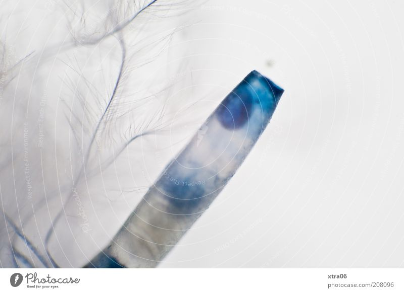 artificial feather Feather Blue Fine Delicate Plastic Colour photo Close-up Detail Macro (Extreme close-up) Deserted hook beam ink colour Point Copy Space right