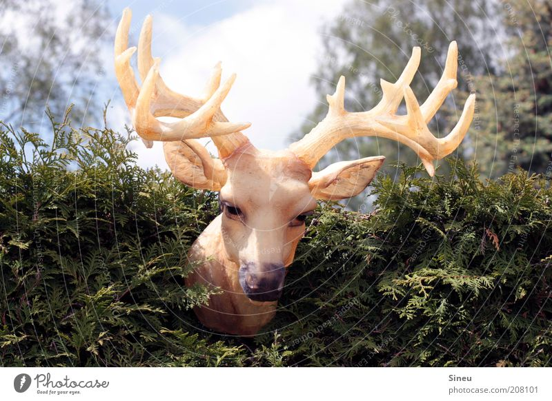 Nature Sky Summer Animal Funny Large Wild Exceptional Statue Plastic Hang False Antlers Hedge Deer
