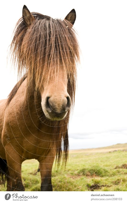 Nature Vacation & Travel Eyes Animal Freedom Head Landscape Elegant Horse Cool (slang) Ear Animal face Symbols and metaphors Iceland Bangs