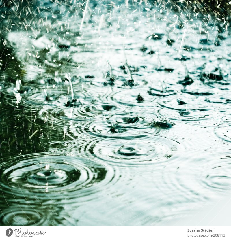 The smell of summer rain Nature Summer Climate Climate change Weather Bad weather Storm Rain Waves Fluid Cold Wet Drops of water Body of water Circle Undulation