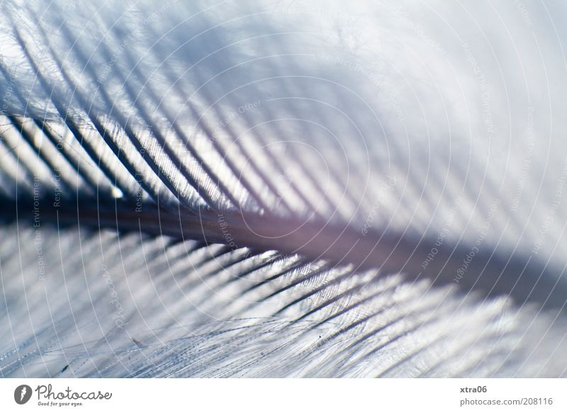 xtra mag feather :) Feather Esthetic Delicate Fine Blue Blur Retroring Colour photo Close-up Detail Macro (Extreme close-up) Pennate Gray Structures and shapes