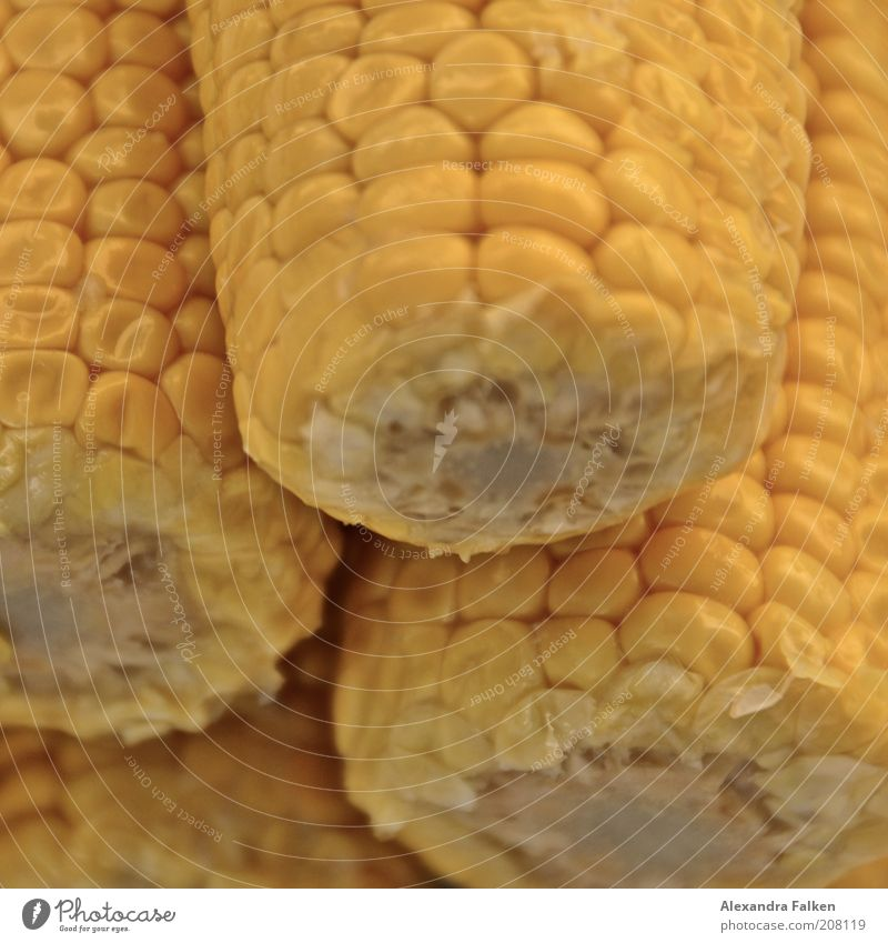 Nutrition Yellow Glittering Food Vegetable Organic produce Maize Corn cob Healthy Eating
