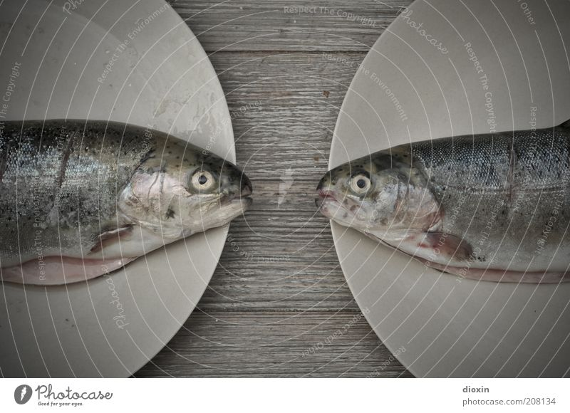 White Blue Eyes Nutrition Animal Death Gray Together Food Fresh Fish Arrangement Fish Animal face Lie Delicious