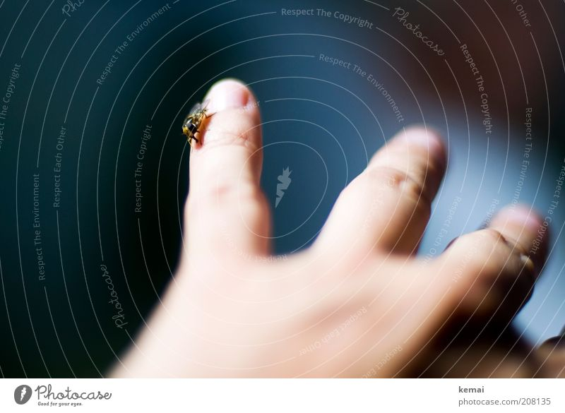 Human being Hand Animal Adults Wild animal Sit Fly Fingers To hold on Trust Insect Sympathy Love of animals Hover fly