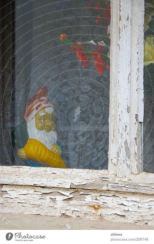 Old Plant Window Wood Glass Gloomy Peace Kitsch Idyll Derelict Decline Trashy Plastic Living room Drape Window pane
