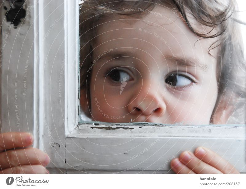 Human being Child White Face Boy (child) Nose Fingers Window Curiosity Infancy Think Window pane Interest Looking Level Portrait photograph