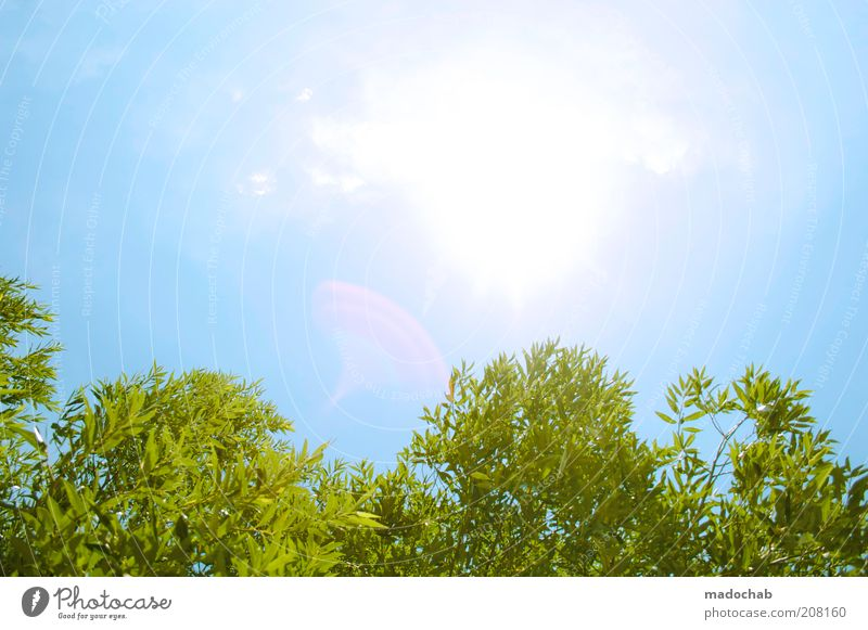 summertime Environment Nature Landscape Plant Sky Cloudless sky Sun Spring Summer Climate Beautiful weather Tree Bushes Energy Leisure and hobbies Ease Break