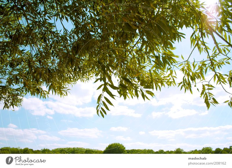 Nature Tree Sun Plant Summer Calm Leaf Clouds Emotions Above Spring Freedom Park Warmth Landscape Moody