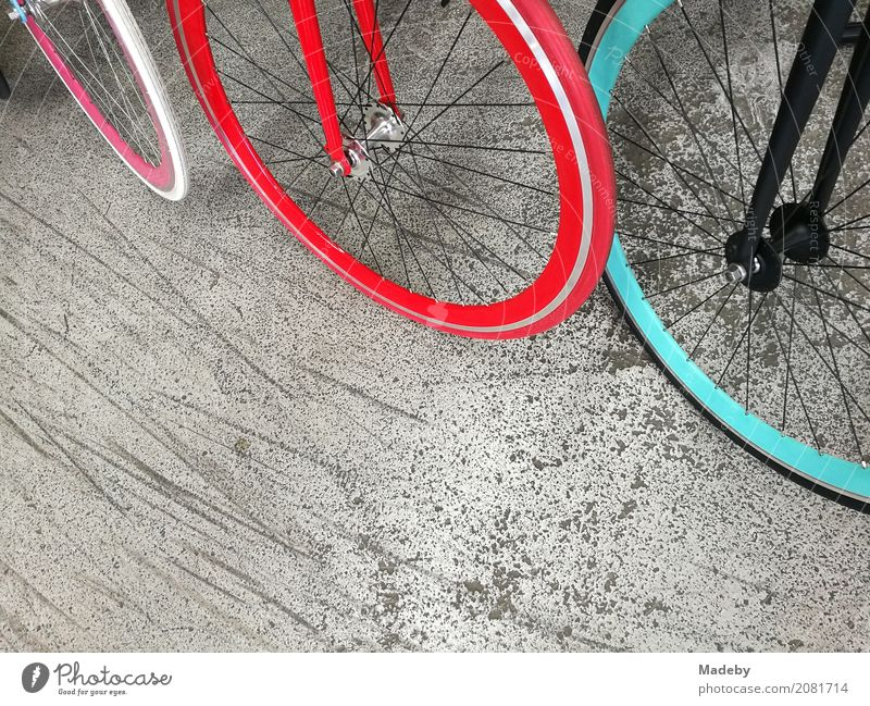 Fashionable city bikes with brightly coloured rims and tyres Lifestyle Shopping Style Design Joy Fitness Cycling tour Trade Youth culture Subculture Party Town