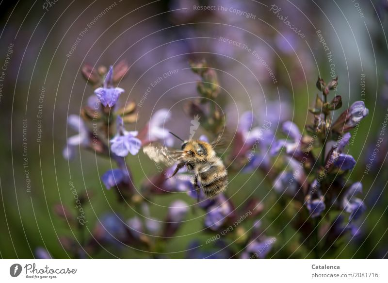 Nature Plant Summer Green Animal Blossom Garden Brown Flying Esthetic Success Blossoming Violet Insect Fragrance Faded