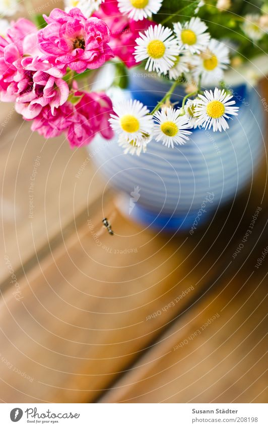 Blue Plant Blossom Small Pink Fly Flying Table Fresh Rose Decoration Insect Blossoming Bouquet Airplane landing Chamomile