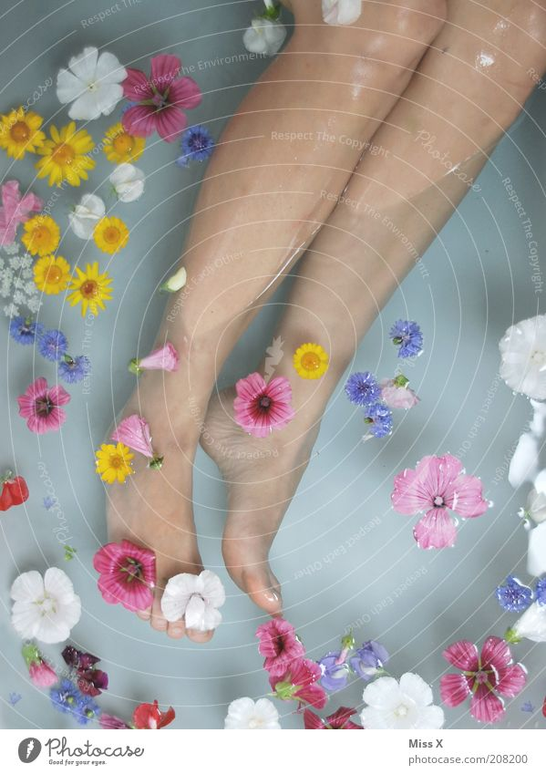 Human being Water Beautiful Flower Calm Relaxation Feminine Blossom Legs Feet Contentment Swimming & Bathing Bathroom Wellness Pure Blossoming