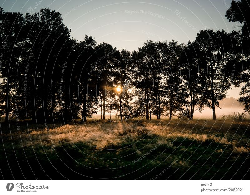 Sun in the treetops Environment Nature Landscape Plant Cloudless sky Autumn Climate Beautiful weather Tree Grass Bushes Meadow Forest Edge of the forest
