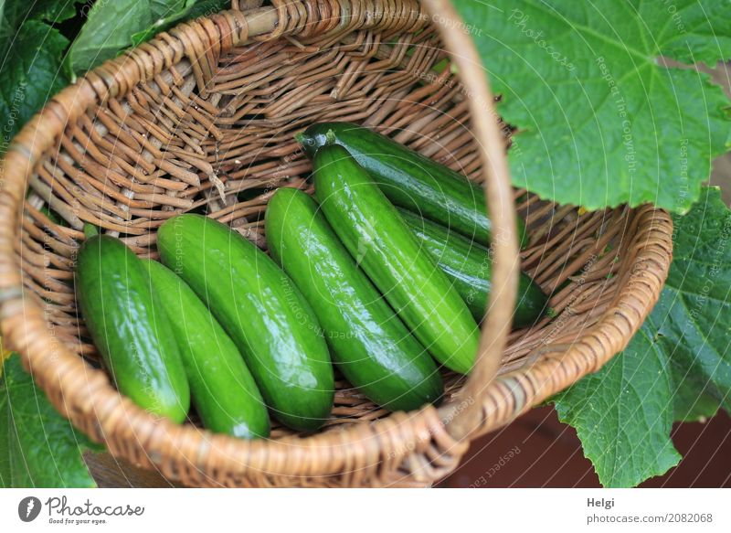 tasty minigigs Food Vegetable Cucumber Nutrition Organic produce Vegetarian diet Plant Leaf Garden Basket Wood Lie Growth Fresh Healthy Delicious Natural Brown