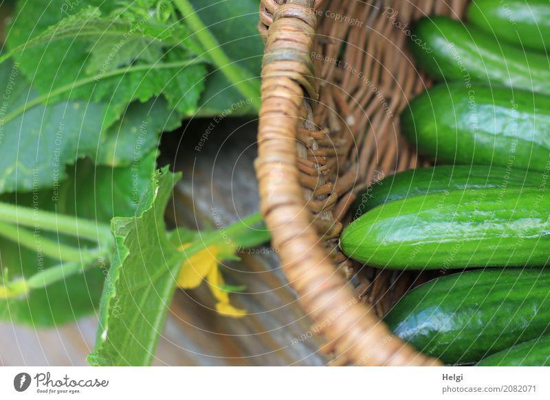 fresh and crisp Food Vegetable Cucumber Nutrition Organic produce Vegetarian diet Environment Nature Plant Summer Leaf Blossom Agricultural crop Garden Basket