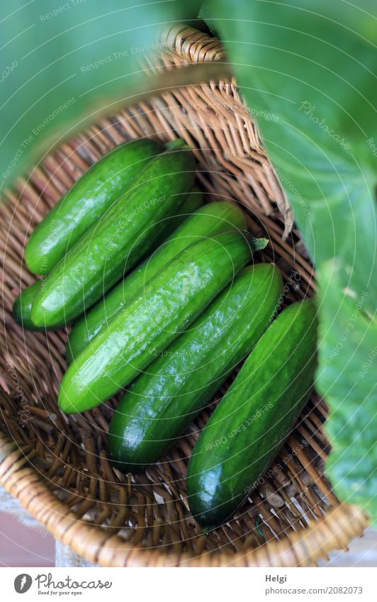 one last ... Food Vegetable Cucumber Nutrition Organic produce Vegetarian diet Nature Plant Leaf Garden Basket Wood Lie Fresh Healthy Delicious Natural Brown