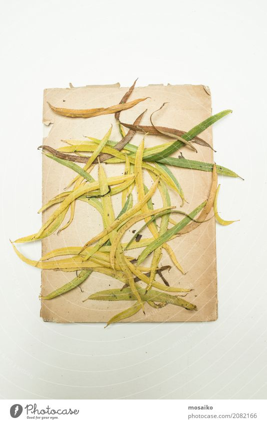 Herbarium - sheets on paper Elegant Design Garden Nature Plant Esthetic Contentment Style Transience Growth Botany Dried Autumnal Poetic Romance Beige Frame