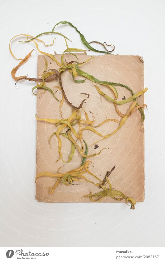 Herbarium - sheets on paper Elegant Design Garden Nature Plant Leaf Exotic Esthetic Contentment Creativity Art Style Transience Growth Botany Dried Autumnal