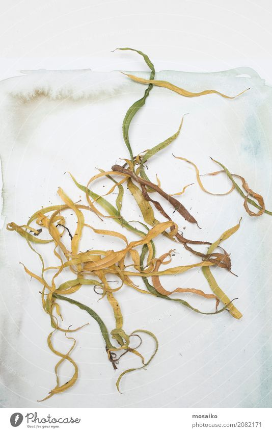 loose sheets on paper Art Environment Nature Plant Autumn Leaf Exotic Esthetic Contentment Uniqueness Inspiration Decline Transience Autumnal Vintage Herbarium