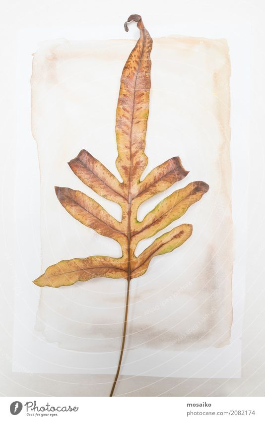 Herbarium - loose sheet on paper Elegant Design Garden Nature Plant Leaf Exotic Esthetic Contentment Style Transience Growth Botany Dried Autumnal Poetic