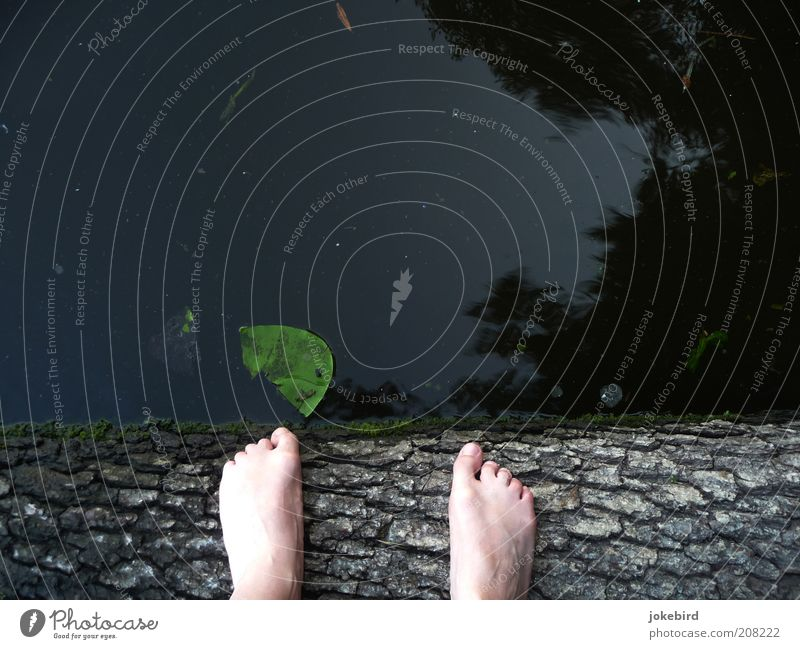 Dirty Dancing or Dirty Pond Feet Toes Water Tree Moss Water lily Water lily leaf Tree trunk Tree bark Lakeside Swimming & Bathing Stand Green Contentment Calm