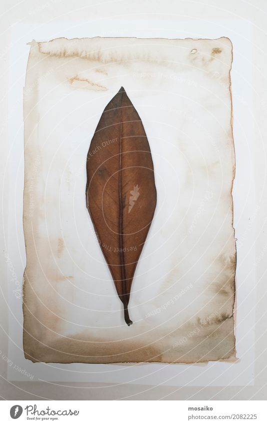 Herbarium - Eucalyptus leaf on paper Elegant Design Garden Nature Plant Leaf Exotic Esthetic Contentment Style Transience Growth Botany Dried Autumnal Poetic