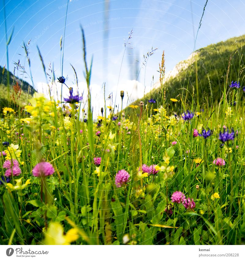 Mountain summer meadow Environment Nature Landscape Plant Sky Sun Sunlight Spring Summer Climate Beautiful weather Warmth Flower Grass Blossom Foliage plant