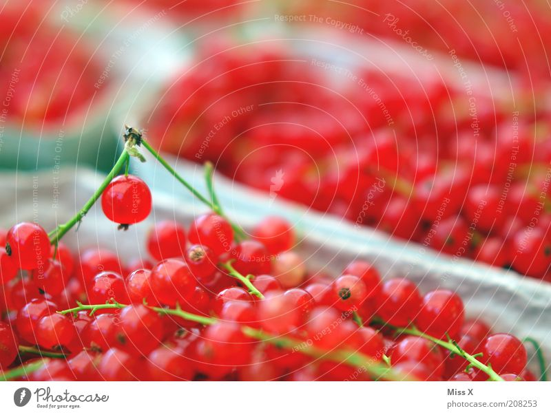 John Food Fruit Nutrition Organic produce Vegetarian diet Plant Agricultural crop Fresh Small Delicious Sour Sweet Redcurrant Berries Fruit bowl Sell