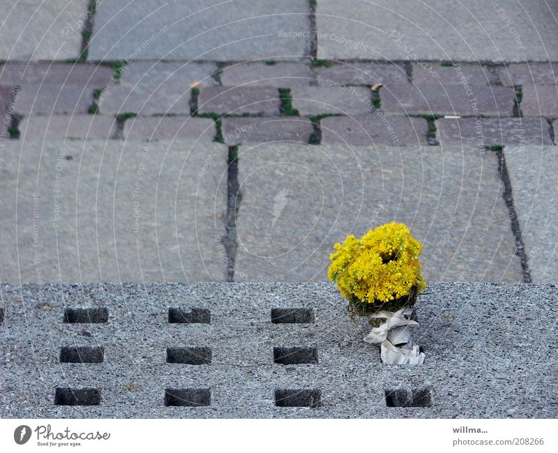 Flower Loneliness Yellow Life Gray Stone Places Gloomy Uniqueness Exceptional Transience Hollow Bouquet Whimsical Doomed