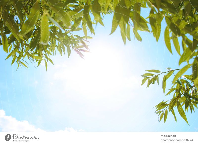Nature Sky Sun Plant Summer Calm Relaxation Emotions Happy Warmth Landscape Contentment Moody Environment Lifestyle Happiness