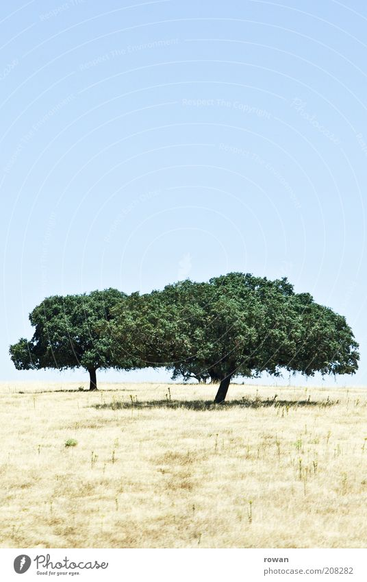 Nature Tree Summer Calm Warmth Landscape Growth Hot Warm-heartedness Dry Beautiful weather Drought To dry up