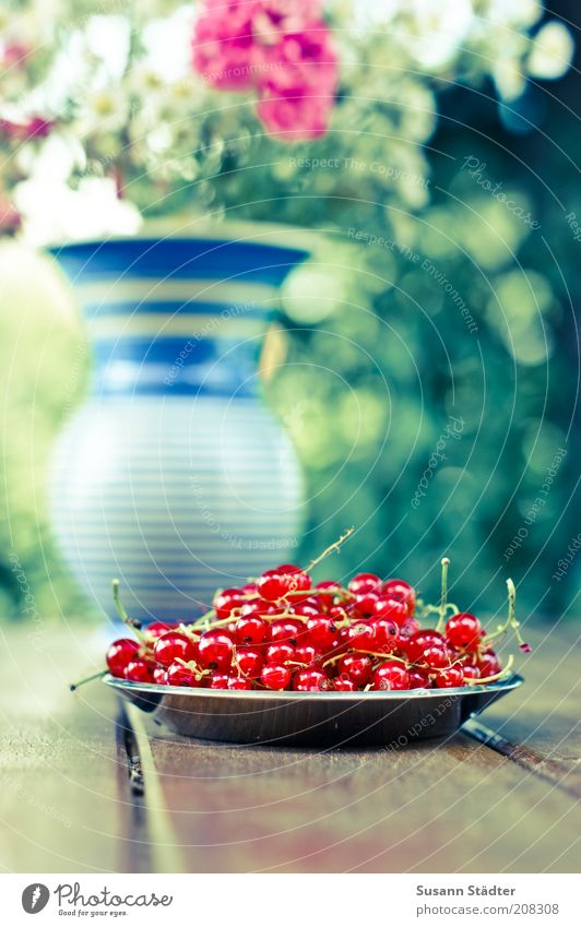 the berries of Johannis Fruit Nutrition Organic produce Vegetarian diet Decoration Bouquet Fresh Uniqueness Beautiful Redcurrant Garden table Wooden table