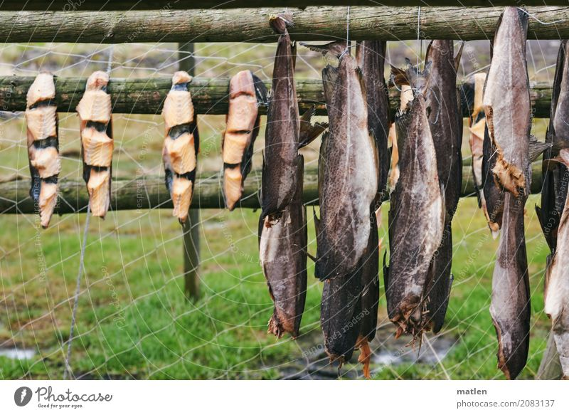 slopes Animal Farm animal Fish Group of animals To dry up Naked Brown Gray Green catch Dried fish Framework Net Meadow Exterior shot Close-up Deserted