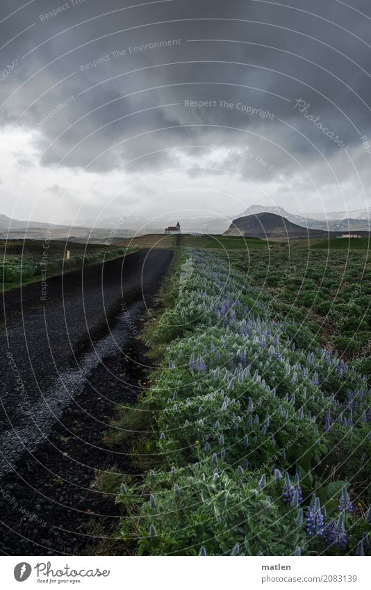 church path Nature Landscape Plant Sky Clouds Storm clouds Horizon Spring Bad weather Mountain Church Lanes & trails Dark Blue Gray Green Black Iceland Lupin