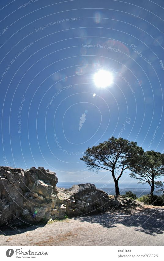 You have reached your destination ..... Cloudless sky Sun Summer Beautiful weather Tree Stone pine Mountain Peak To enjoy Dream Esthetic Hot Above Blue Calm