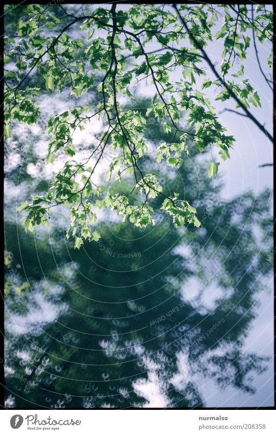 fresh green Environment Nature Plant Beautiful weather Tree Leaf Foliage plant Glittering Illuminate Natural Positive Juicy Moody Climate