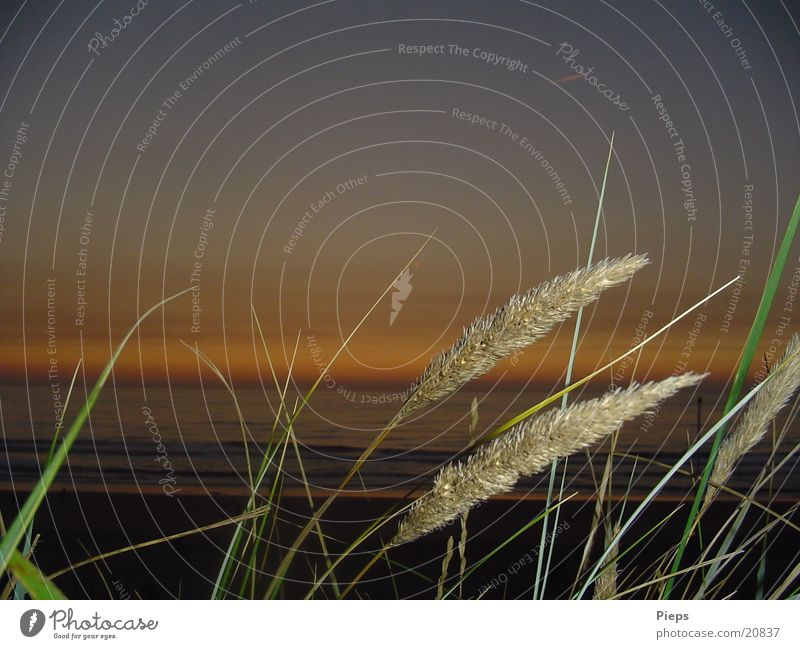 Grass in Holland Colour photo Exterior shot Evening Flash photo Vacation & Travel Summer Beach Ocean Waves Nature Water Sky Horizon Sunrise Sunset Coast
