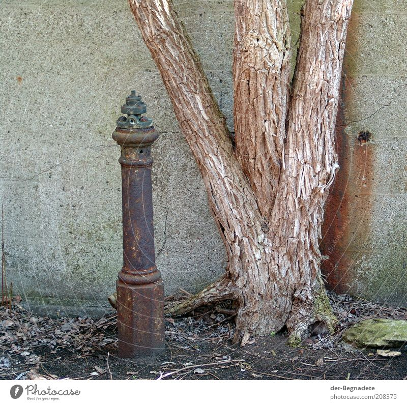 To the old iron Fire hydrant Tree Ruin Manmade structures Wall (barrier) Wall (building) Stone Concrete Wood Metal Steel Loneliness Nature Nostalgia Moody