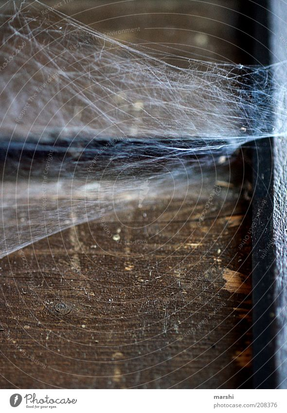 Spidermans Home Nature Old Spider's web Disgust Wood Wooden wall Dirty Colour photo Exterior shot Wooden board Corner Seam Derelict Shabby Past Brown