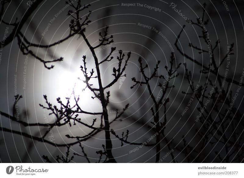 Nature Plant Winter Dark Black Bushes Branch Twig Bleak Night sky Moon Black & white photo Moonlight Full  moon Sky