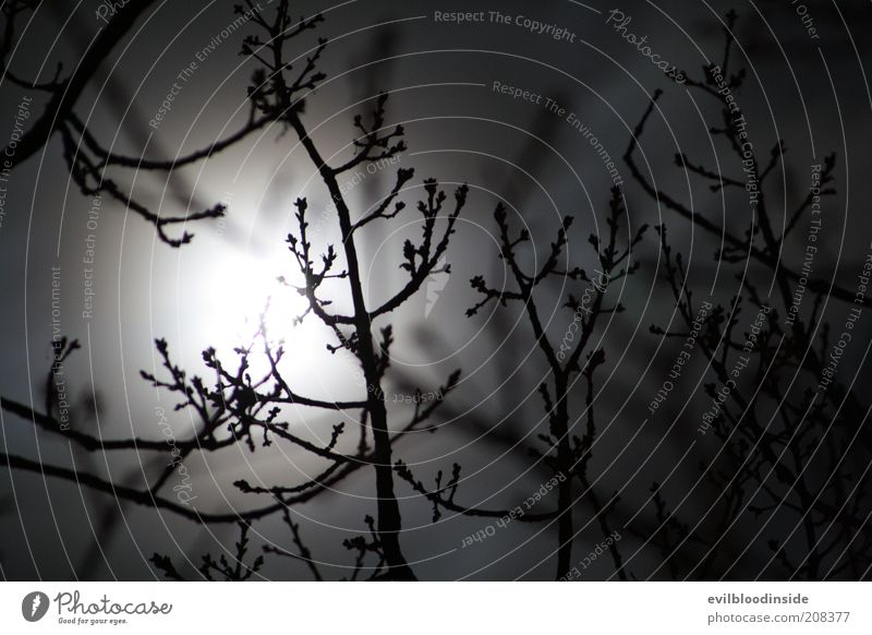 Nature Plant Winter Dark Black Bushes Branch Twig Bleak Night sky Moon Black & white photo Moonlight Full  moon Sky